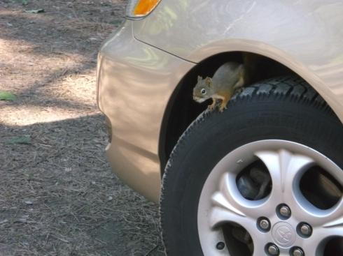 Squirrel Wheel