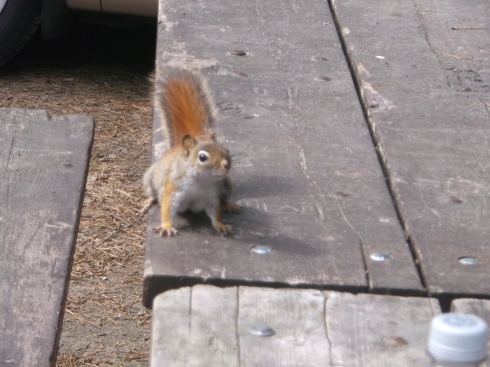 Squirrel Table