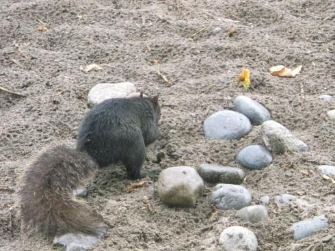 Beach Squirrel 2