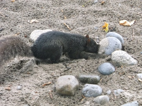 Beach Squirrel 3